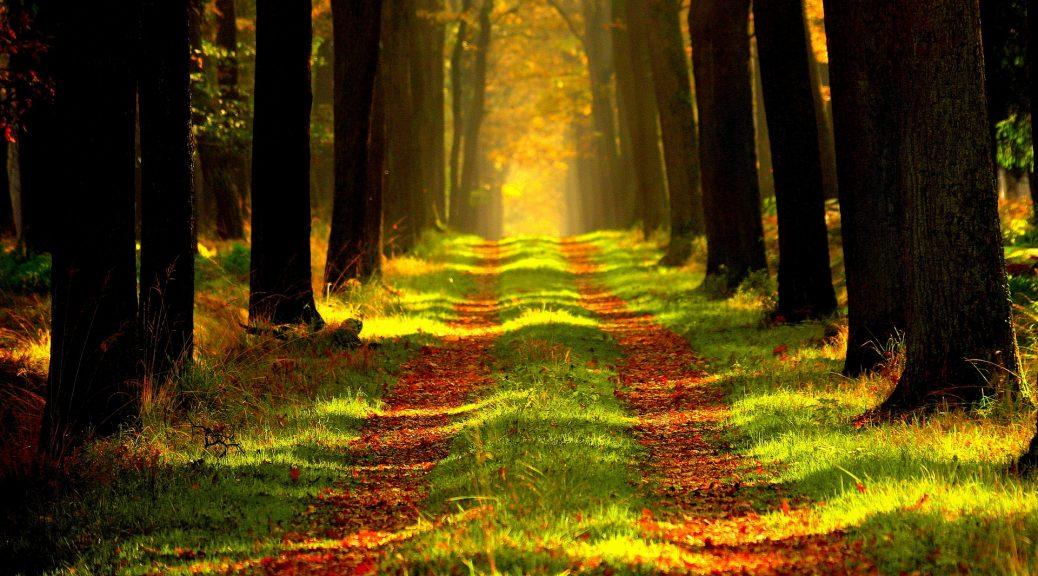 Уровни саморазвития без духовности